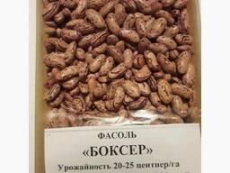 3D фасоль высокого качества из Киргизии - фото 3