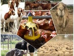 Livestock, ox gallstone and ostrich chicks - фото 1