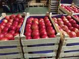 Яблоки из Польши! - photo 6