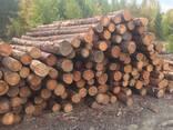 Лес круглый. Сосна, лиственица - фото 2