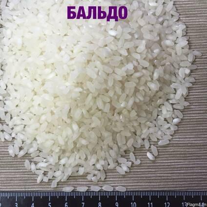 Medium grain elite rice, Camolino