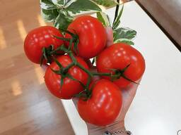 Производители свежих томатов собственного производства