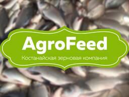 Рыба. Комбикорм гранулированный для рыбы. Ашхабад