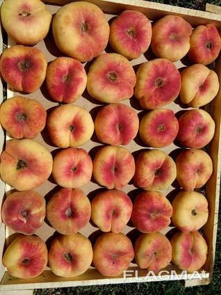 Саженци плодовых культур
