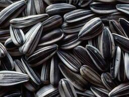 Семена подсолнечника - photo 1